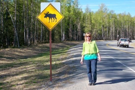 moose crossing signs i love it picture of anchorage alaska