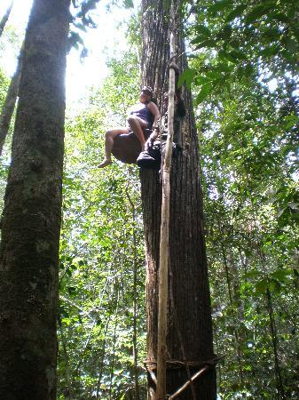 Camp Leakey: sitting on a gigantic mushroom way up on a tree!!