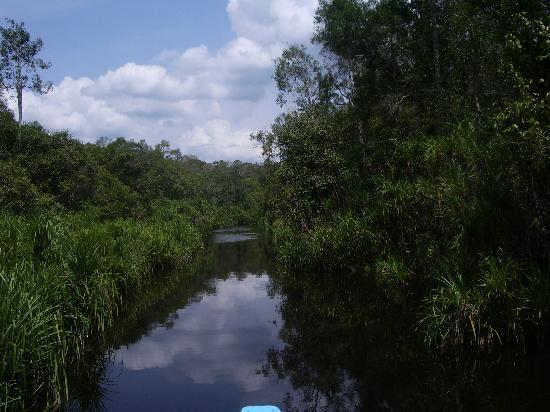 "Central Kalimantan, Indonésie : the clean ""black water"" in the jungle"