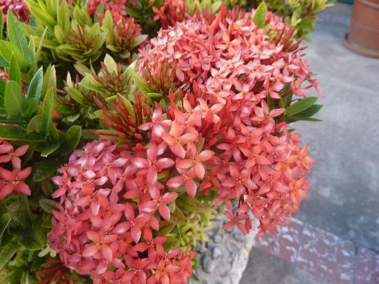 club ambiance preciosas flores y vegetacion