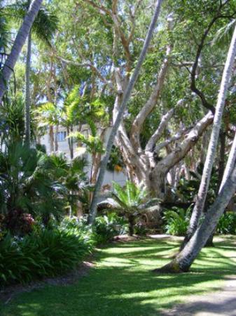 Bilde fra Palm Cove