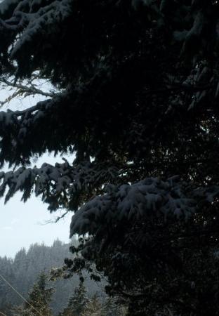 Eugene Photo