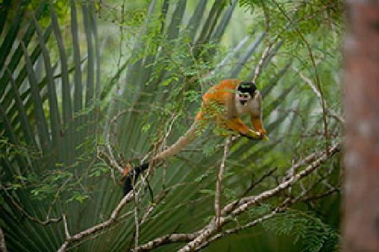 La Ponderosa Beach and Jungle Resort: wildlife