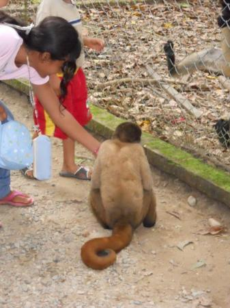 Tena, Ecuador: no rules in ecuador! give the wild animals all the candy and crackers you want kids