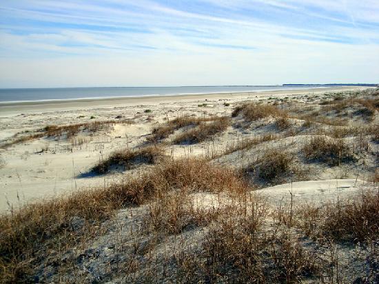 Cumberland Island National Seashore: sand dunes