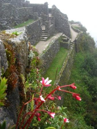 flowers nestled in the wall of ancient ruins inca trail peru