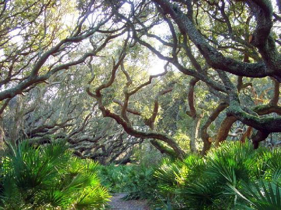 Cumberland Island National Seashore: on the island