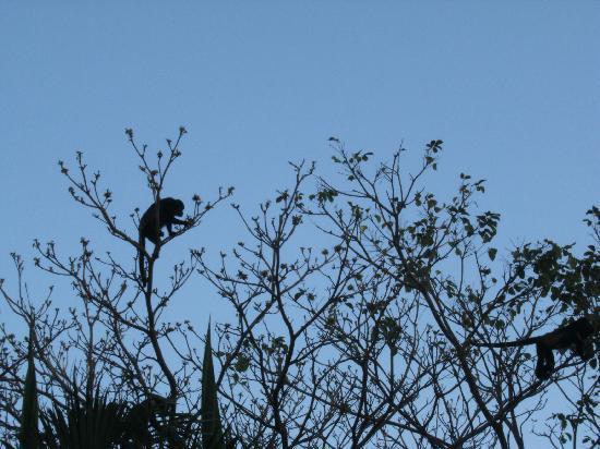 Monkeys living across from our room