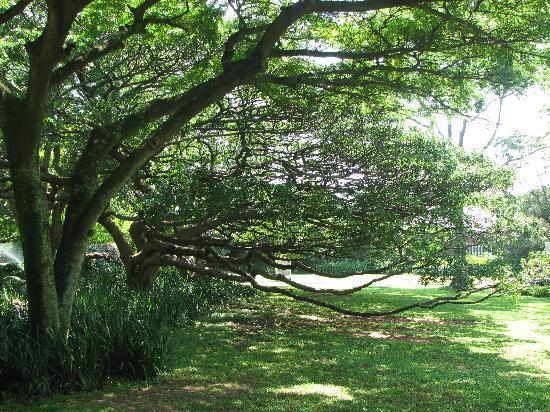 Durban Botanic Gardens: breath taking beautiful