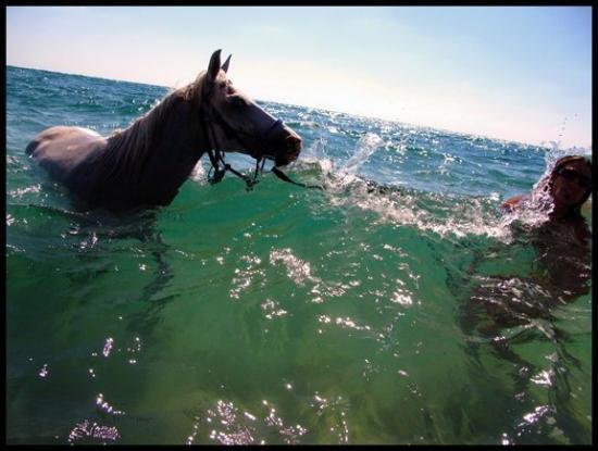 Ginosar, Ισραήλ: Mikhmoret Beach, Israel