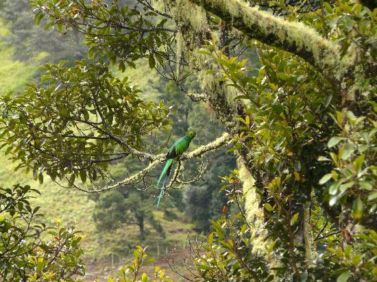 Trogon Lodge San Gerardo de Dota : Resplendent Quetzal