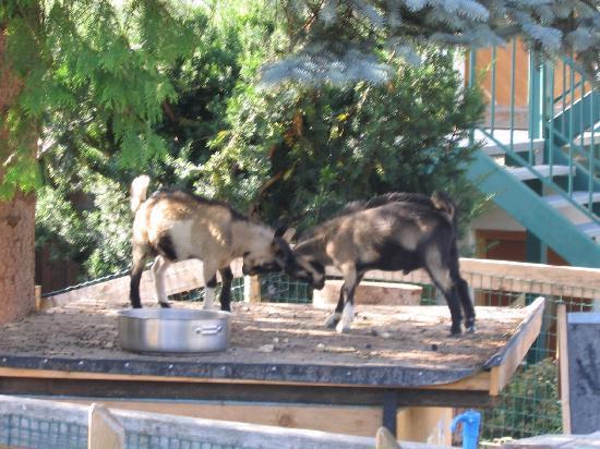 Kirchberg, Austria: Streichelzoo im Hotelgarten