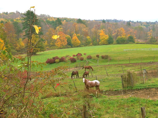 Lenox, MA: Horseback riding and hiking nearby