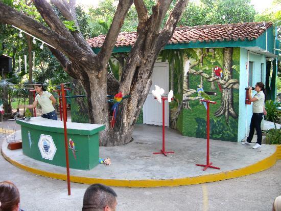 Acuario Mazatlan: bird show