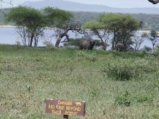 Ndutu Safari Lodge: Don't wander too far. You are being watched.