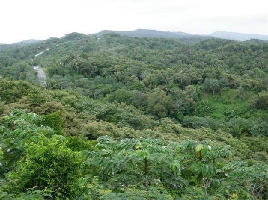 Mayan Princess Beach & Dive Resort: Loved the terrain