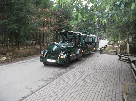 Center Parcs Longleat Forest: Land Train