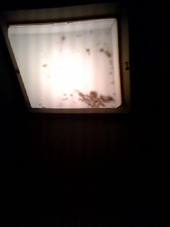 Tucson AZ Travelodge: Light/Fan in the bathroom- filled with bugs and dirt
