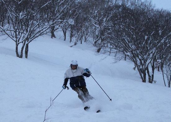 Hokkaido, Japan: more trees