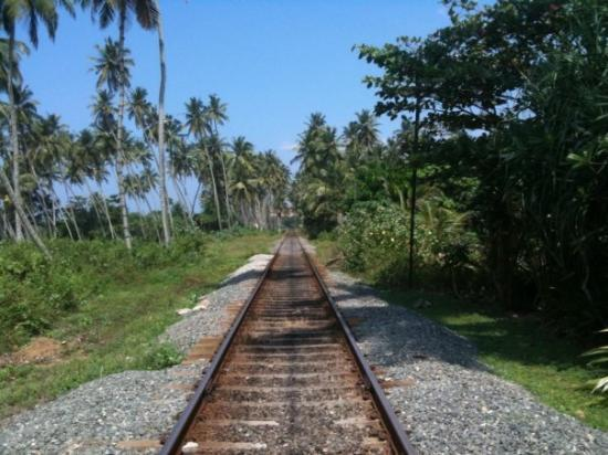 Jungle railway. This is the main line north/south. Bentota.