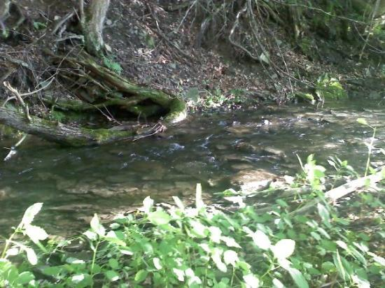 Gillett, PA: a creek down back.. fresh water un- touched