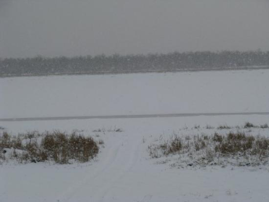 Emmonak, AK: That white area behind those bushes is the Yukon River. It is almost frozen now.