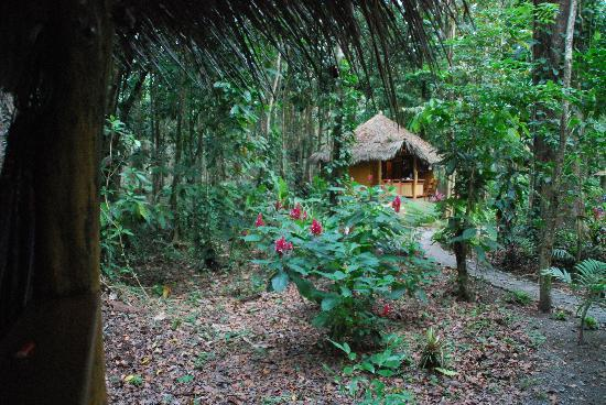 Korrigan Lodge: 1 des 4 bungallows dans la jungle