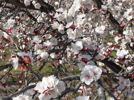 The Plum Tree B&B : The Blossoms