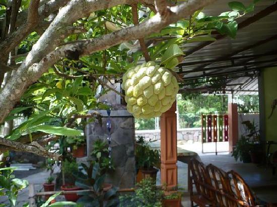 Rodrigues Island: Une zatte