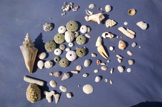 Coral Cove Resort: Excellent Shelling at Coral Cove