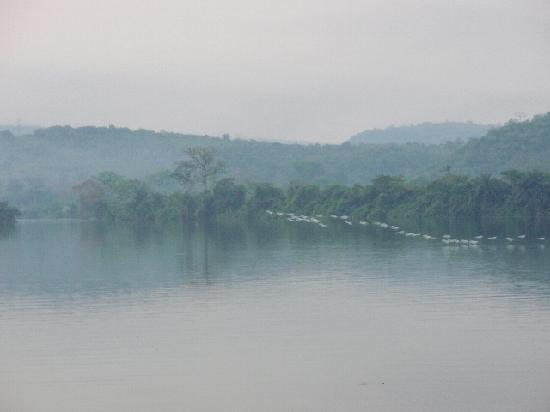 Afrikiko River Front Resort: Evening at Afrikiko--egrets over the Volta