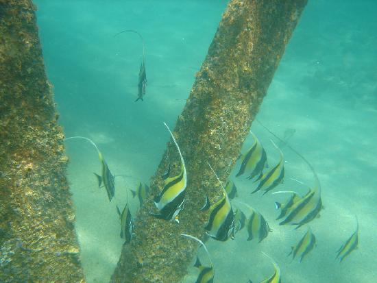 Hotel Palmas de Cortez: Good Snorkeling