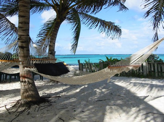 West End Village, Anguilla: Hammocks under palms at Gwen's