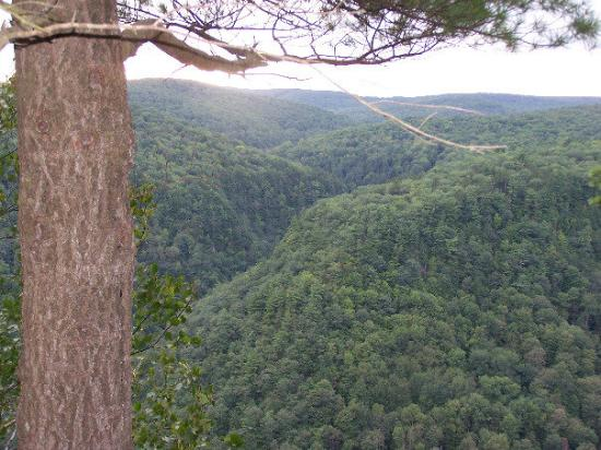 Pine Creek Gorge Bild