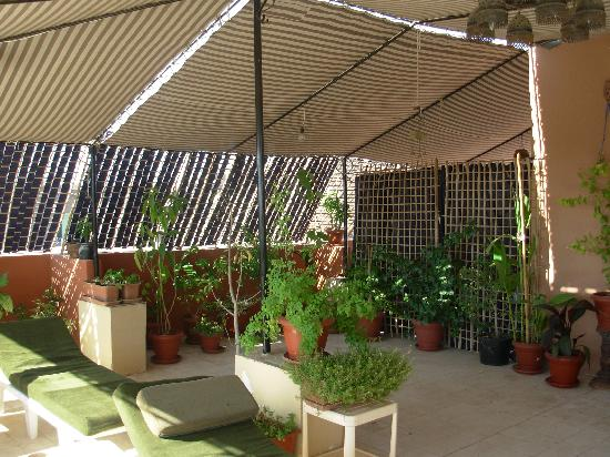 Mara House: roof garden