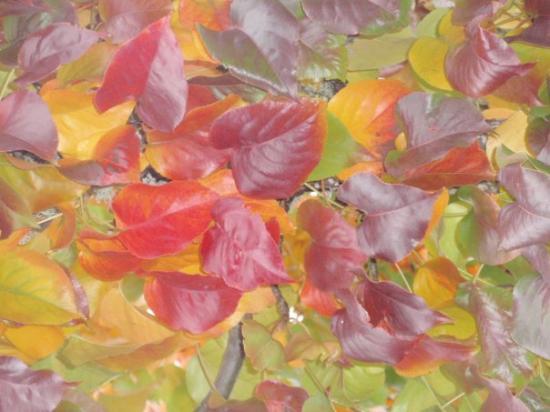 Eugene, Oregón: Fall Colors