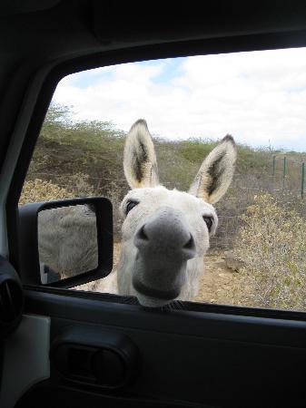 The Lizard Inn: Donkey @ Sanctuary