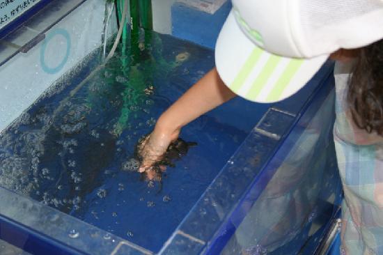Enoshima Aquarium: ドクターフィッシュの体験コーナー