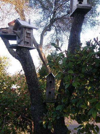 Bonnie's Inn Motel: Bird Motel