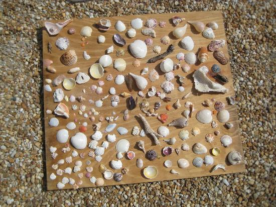 Periwinkle Cottages of Sanibel: a few shells