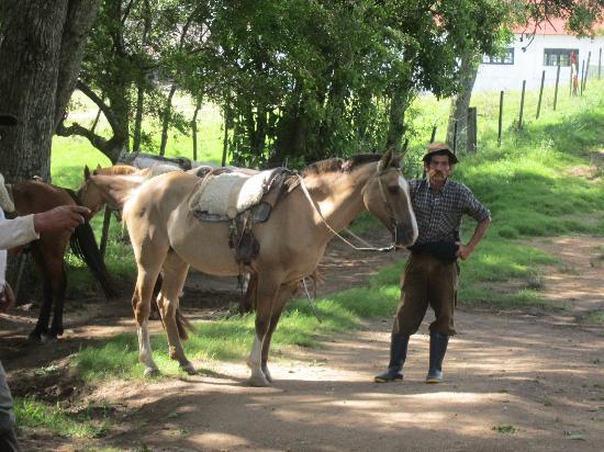 Florida, Uruguay: Gaucho with horse