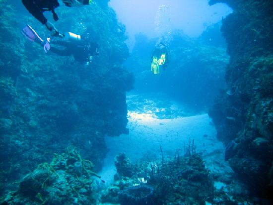Scuba Club Cozumel: divers exploring