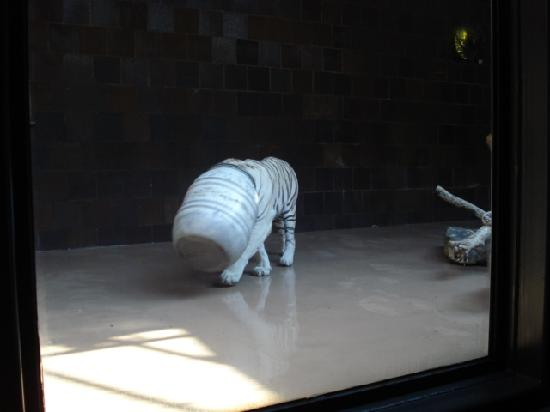 Henry Doorly Zoo: Silly kitty