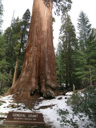 Sequoia Sightseeing Tours Sequoia and Kings Canyon National Park