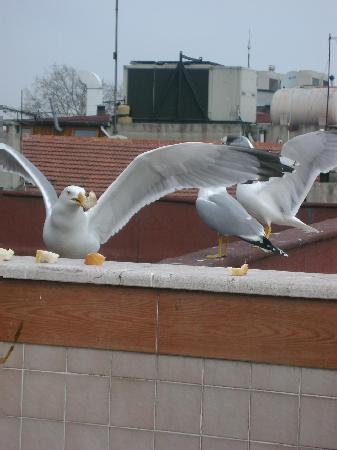 Hali Hotel: Local Birds