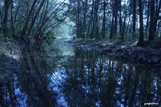 Anawangin Cove: anawangin