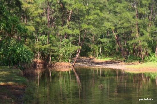 Anawangin Cove: anawangin view