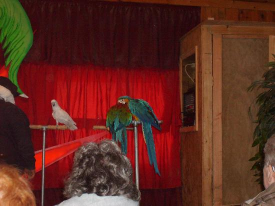 The Dancing Horses Theatre: the bird show was also great