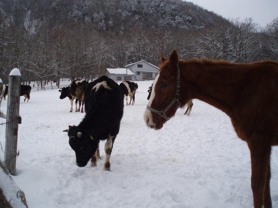 Kotoku Farm: 馬と牛たち