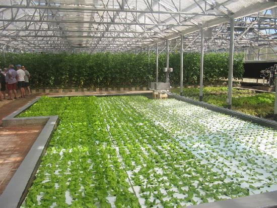 كيوزين آرت جولف ريزورت آند سبا: Inside the hydroponic garden